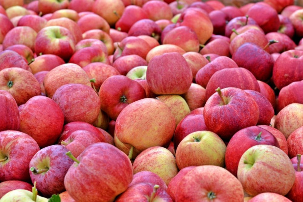 Czy jest szansa na wzrost cen jabłek?