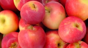 Koniec zapasów jabłek Gala na Ukrainie. Jak to wpłynie na rynek?