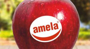 Produkcja jabłek pod marką Amela będzie opłacalna?