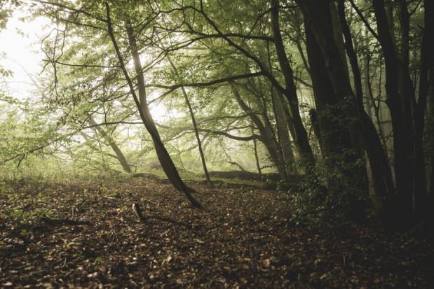 Leśnictwo - w nowym projekcie ustawy o działach administracji