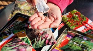 Czym kierować się przy zakupie nasion warzyw?