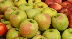 Mniej jabłek w Belgii. W marcu zabraknie Jonagolda i Goldena