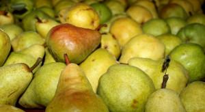 Rosja zakazuje importu gruszek z Republiki Serbskiej