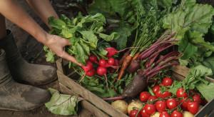 MRIRW o trudnej sytuacji producentów warzyw: muszą wzmacniać swoją pozycję