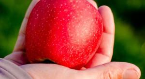Włoskie jabłka Ewelina zadebiutowały w Tajwanie