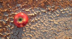 Zmiany klimatu - czy za 80 lat Polska będzie owocowym eldorado?