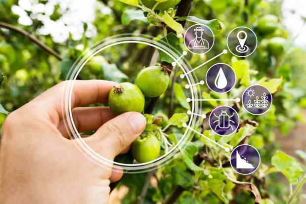 Nowoczesne technologie stają się coraz popularniejsze w sadownictwie