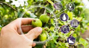 Sztuczna inteligencja sprawi, że jabłka będą bardziej naturalne