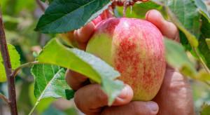 Polak wyjechał na zbiór jabłek do Francji i zaginął pierwszego dnia pracy