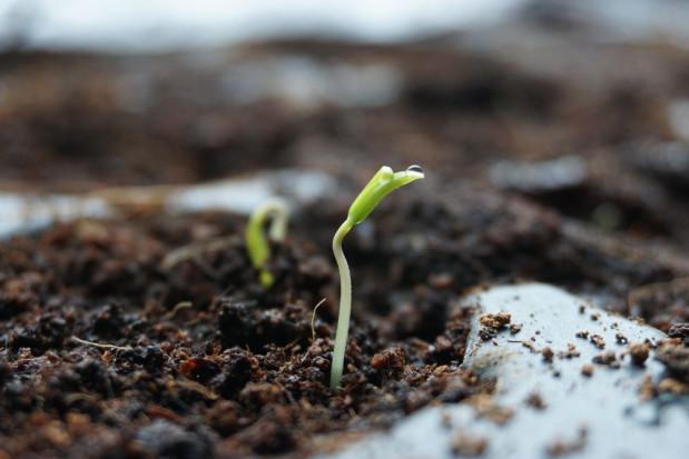 Jak dobrze wybrać nasiona warzyw pod uprawę?