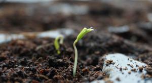Jak dobrze wybrać nasiona pod uprawę warzyw?