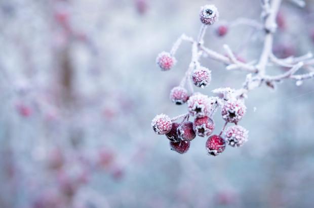 IMGW: opady śniegu i gęste mgły; ślisko na drogach, najzimniej -11 st.C