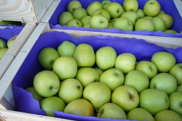 Ceny jabłek na sortowanie: w handlu widoczne jest ożywienie