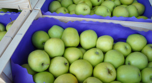 Jakie ceny jabłek na sortowanie? (analiza)