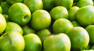 Holendrzy importują serbskie jabłka i sprzedają je pod marką Sappy