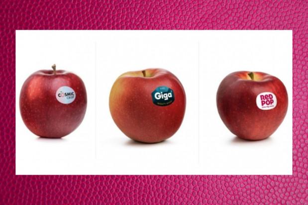 Włosi wprowadzili do uprawy 3 nowe odmiany jabłek