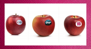 Włosi wprowadzają 3 nowe odmiany jabłek