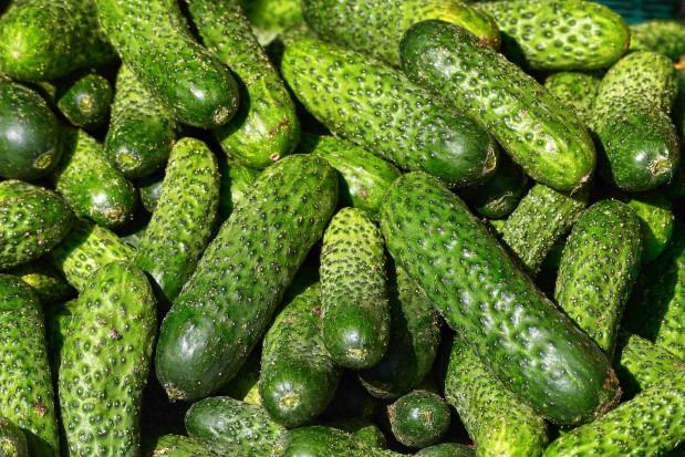 Bronisze: Pierwsze krajowe ogórki gruntowe z upraw dogrzewanych w cenie 29-33 zł/kg