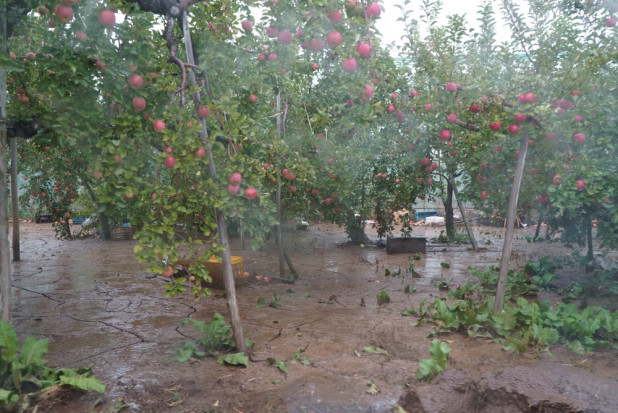 Chile: Deszcz i grad spowodowały poważne szkody w sektorze owoców
