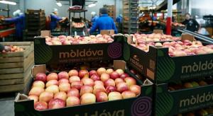 """Mołdawskie jabłka """"rozpychają się"""" na europejskim rynku"""