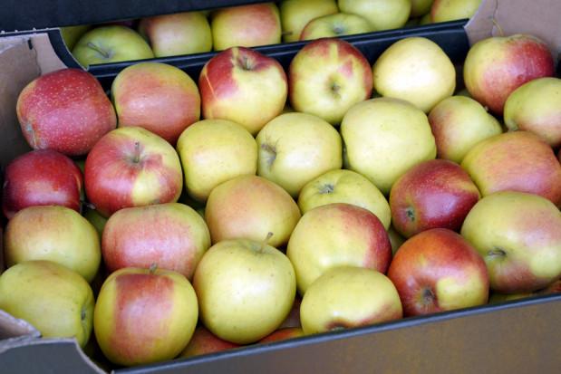 Gruzja: Eksport jabłek  znacznie wyższy niż przed rokiem
