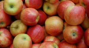 Spadek zapasów jabłek w UE zwiększy popyt eksportowy?