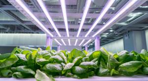 Kraków: na Uniwersytecie Rolniczym powstała modułowa uprawa hydroponiczna