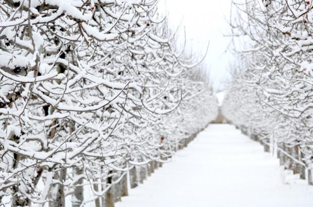 Zima szybko nie odpuści, ujemne temperatury do przyszłego tygodnia