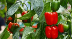 COBORU: 28 nowych odmian roślin warzywnych