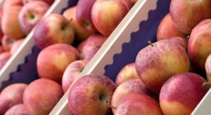 Fruit-Group: To był najlepszy styczeń w sprzedaży jabłek od lat