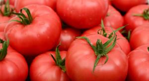 Polskie pomidory malinowe po 12,99 zł/kg w promocji w dyskoncie