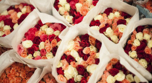 Hurt: Walentynki napędzają sprzedaż kwiatów. Niski popyt na warzywa i owoce