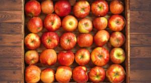 Genesis Fresh: wkrótce wyższe ceny i wzrost popytu na polskie jabłka