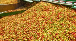 Zagęszczony sok jabłkowy: większy popyt szansą na wzrost sprzedaży