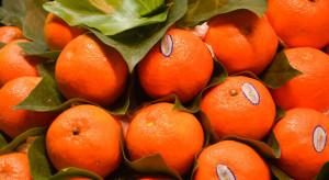 Japonia: promienie UV ochronią mandarynki przed gniciem