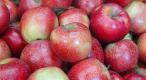 Irańscy sadownicy mają problem z nadwyżką jabłek