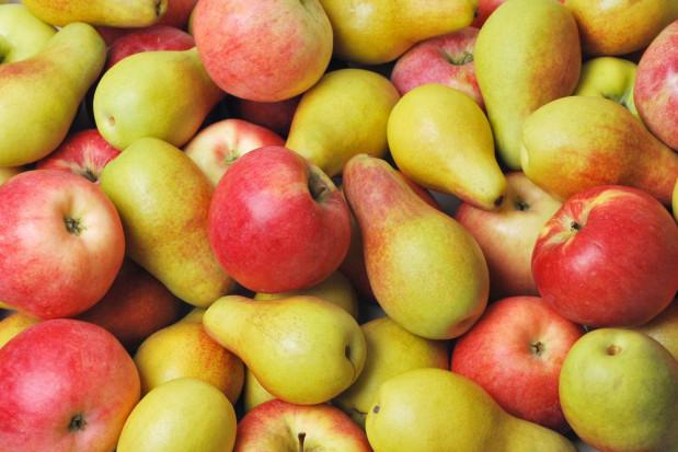 Belgijskie zapasy owoców: mniej jabłek, więcej gruszek