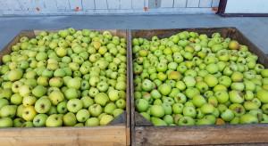 Przybywa ofert zakupu jabłka za wagę w skrzyni