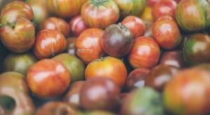 Kwitnie eksport pomidorów z Chin do Włoch, mimo doniesień o pracy przymusowej