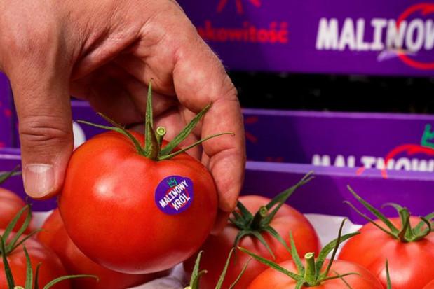 """Spór o pomidory """"Malinowy Król"""" zakończy się w sądzie?"""