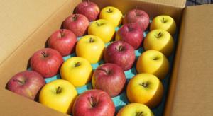 Rosną ceny ukraińskich jabłek