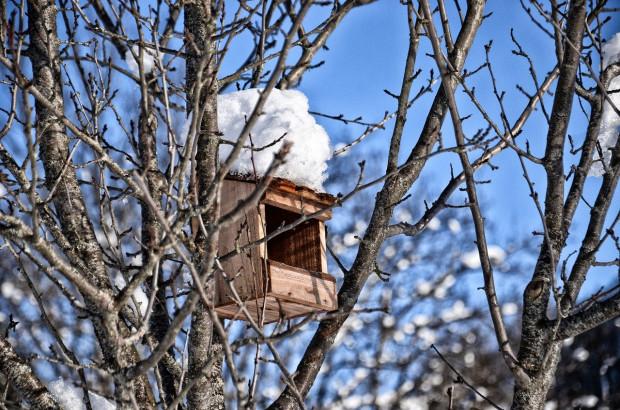Przyrodnik: można już wieszać budki lęgowe dla ptaków