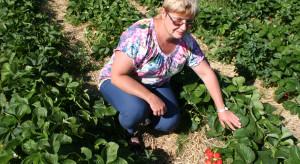 QualityBerry - projekt IO mający na celu poprawę jakości owoców jagodowych
