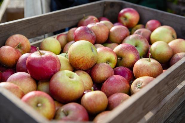 Jakie ceny jabłek i gruszek na Broniszach?
