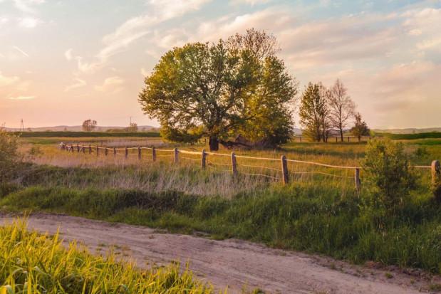 MRiRW: duże rozdrobnienie agrarne. Będzie wsparcie na scalanie gruntów