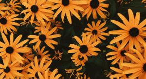 Przydomowe ogródki największym źródłem pożywienia dla zapylaczy