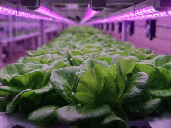 Kanada ogłosiła konkurs na produkcję kosmicznej żywności