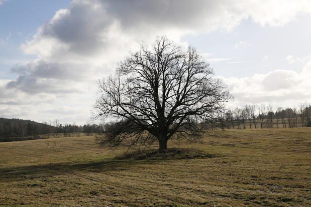 IMGW: w weekend chłodniej i bardziej wietrznie