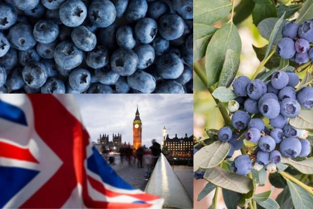 Brexit – jakie wyzwania przed producentami borówek?