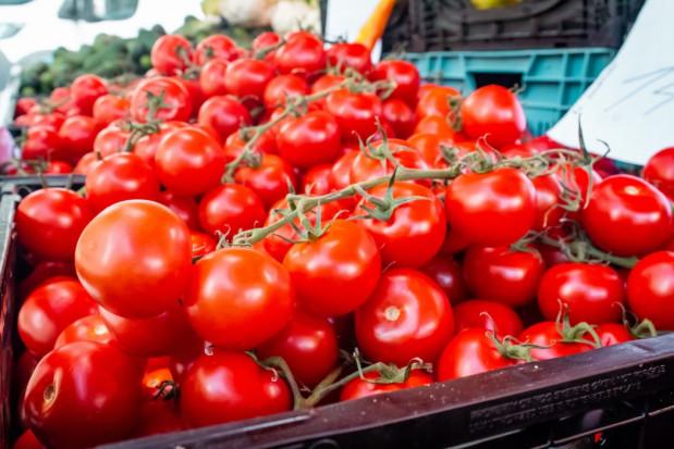 Hiszpania importowała rekordową ilość pomidorów z Maroka w 2020 r.